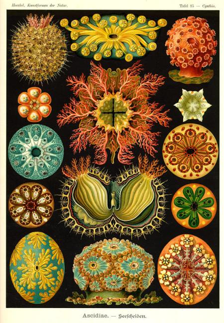 1214_ernst_haeckel_photo_1